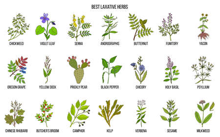 Best laxative herbs icons set Vector illustration.