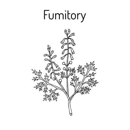Fumitory Fumaria officinalis Earth smoke Vector illustration.