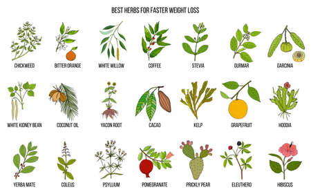 Best natural herbs for fast weight loss Stock Illustratie