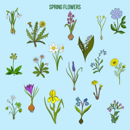Spring flowers set. Hand drawn botanical vector illustration