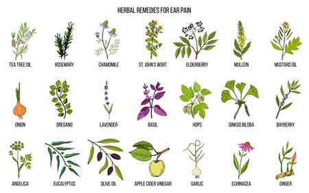 Las mejores hierbas medicinales para el dolor de oído. Conjunto de vector dibujado a mano de plantas medicinales
