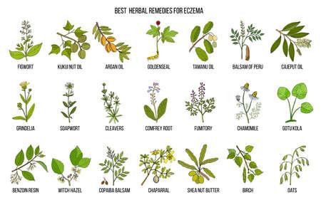 Meilleures herbes médicinales pour l'eczéma. Ensemble de vecteurs dessinés à la main de plantes médicinales