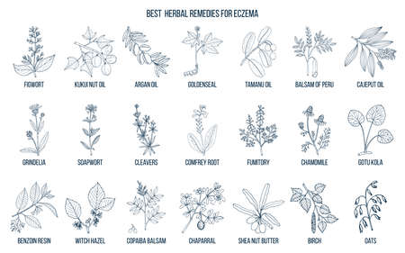 Best medicinal herbs for eczema. Hand drawn vector set of medicinal plants