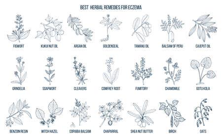 Meilleures herbes médicinales pour l'eczéma. Ensemble de vecteurs dessinés à la main de plantes médicinales Vecteurs