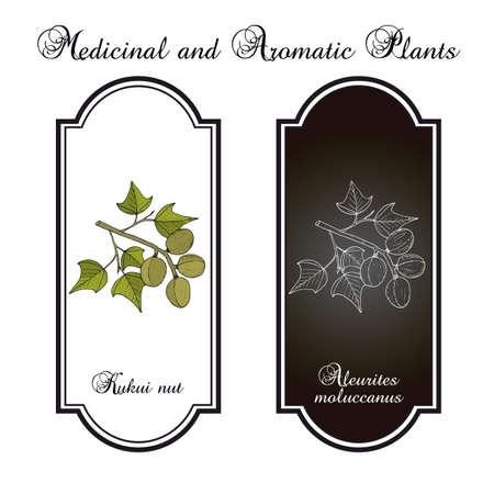 Kukui nut Aleurites moluccanus , or candlenut, indian walnut, medicinal plant. Hand drawn botanical vector illustration Ilustração