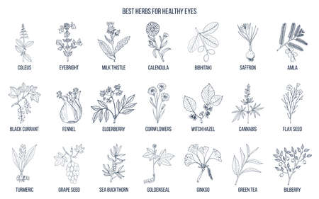 Best medicinal herbs for healthy eyes. Stock Illustratie