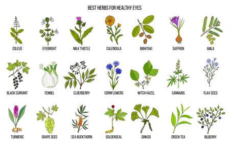 Best medicinal herbs for healthy eyes. Hand drawn vector set of medicinal plants
