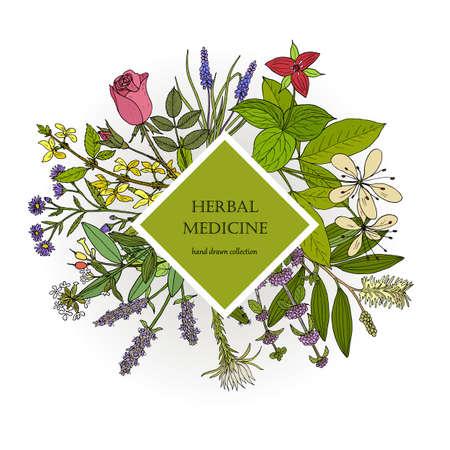 Collection de plantes médicinales différentes. Illustration vectorielle dessinés à la main