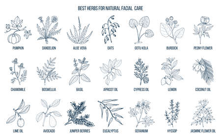 Best medicinal herbs for natural facial care illustration.