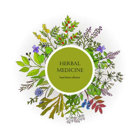 Collection de plantes médicinales différentes