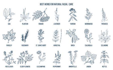 Best medicinal herbs for natural facial care. Hand drawn vector set of medicinal plants