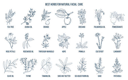 Best medicinal herbs for natural facial care