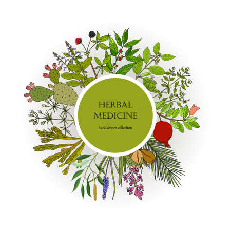 Different medicinal plants collection