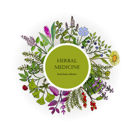 Different medicinal plants collection. Hand drawn vector illustration  イラスト・ベクター素材