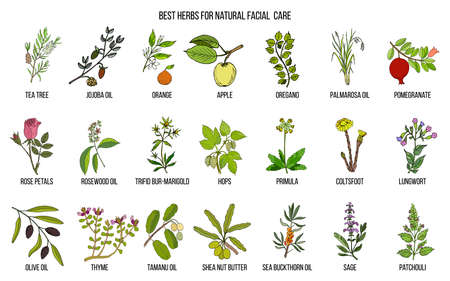 Best medicinal herbs for natural facial care Vector illustration. Ilustração