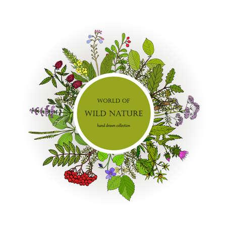Wild nature plants collection. Hand drawn vector illustration Illustration