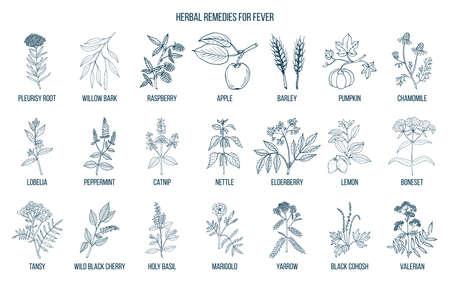 Meilleures herbes médicinales pour la fièvre. Ensemble de vecteurs dessinés à la main de plantes médicinales Banque d'images - 99925911