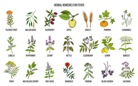 Meilleures herbes médicinales pour la fièvre Banque d'images - 99947469