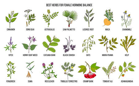 Best herbs for female hormone balance