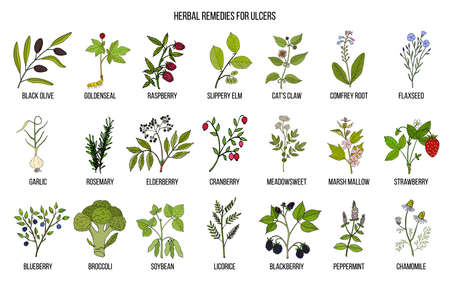 Best medicinal herbs for ulcers Illustration