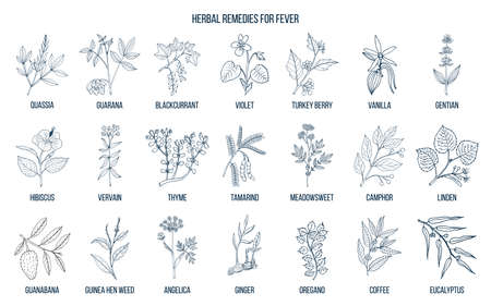Best medicinal herbs for fever