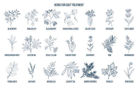 Collection d'herbes naturelles pour le traitement de la goutte