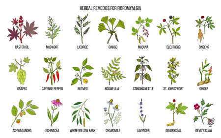 Best medicinal herbs for fibromyalgia Stock Photo - 100302799