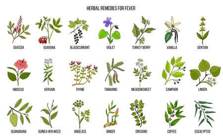 Beste Heilkräuter gegen Fieber. Handgezeichneter Vektorsatz von Heilpflanzen