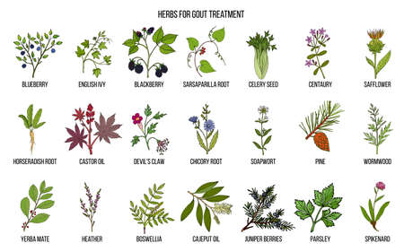 Collection of natural herbs for gout treatment Standard-Bild - 115014882