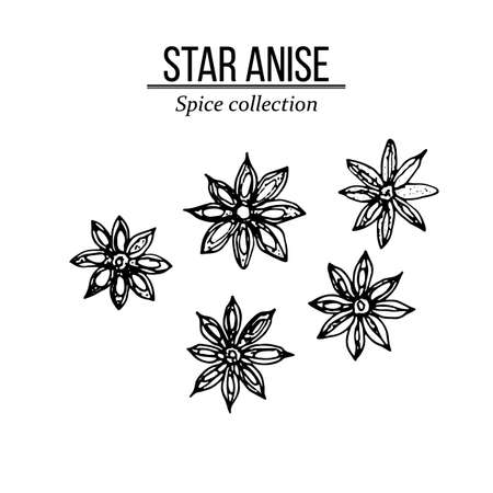 Spice collection, star anise hand drawn. Vector illustration Ilustracja