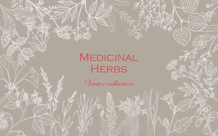 Vintage collection of hand drawn medicinal herbs and plants. Vector illustration