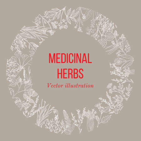 Vintage collection of hand drawn medicinal herbs and plants