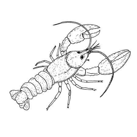 Lobster wildlife animal, hand drawn vector illustration Ilustração