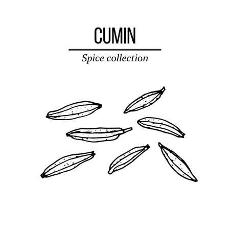 Kolekcja przypraw, ręcznie rysowane nasiona kminku Ilustracje wektorowe