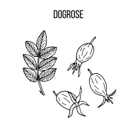 Berry hand drawn collection, dogrose