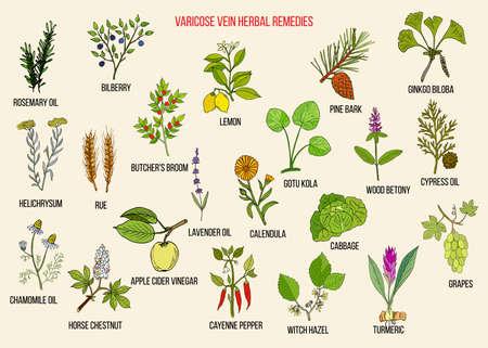 Remèdes à base de plantes pour les varices. Ensemble de vecteurs dessinés à la main de plantes médicinales Vecteurs