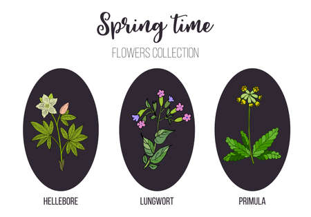 Spring flowers set primula, lungwort, hellebore. Hand drawn botanical vector illustration Ilustração