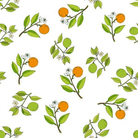 Orange and bergamot branches seamless pattern. Vector illustration.