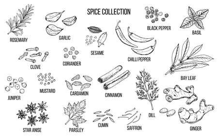 Collezione di spezie e verdure disegnata a mano. Illustrazione vettoriale