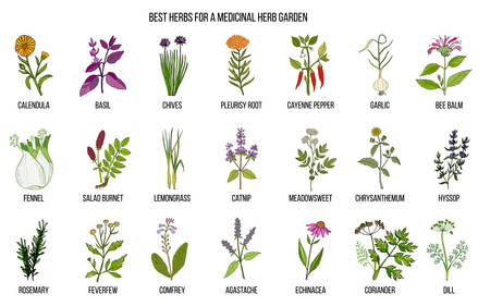 Best herbs to grow in your medicinal garden. Hand drawn vector set