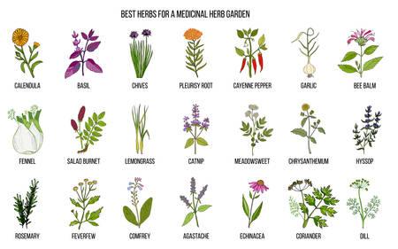 Die besten Kräuter für Ihren Heilgarten. Handgezeichneter Vektorsatz