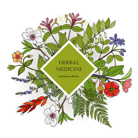Health natural care, vintage collection of hand drawn medicinal herbs and plants. Botanical vector illustration Çizim