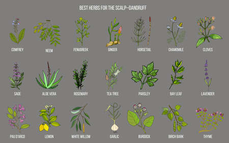 Best medicinal herbs for scalp-dandruff. Vector hand-drawn collection Illustration
