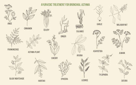 Ayurvedic herbs for asthma treatment. Hand drawn botanical vector illustration