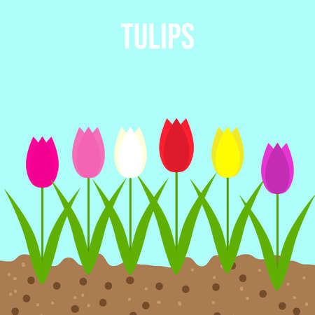 Tulips set of spring garden flowers. Flat style vector illustration