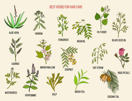 Best medicinal herbs for hair care. Vector hand drawn collection