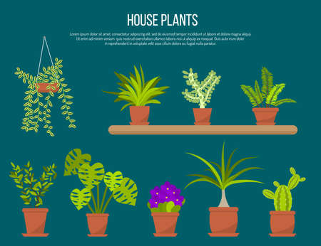 Collection of indoor house plants and flowers in pots. Flat vector illustration Çizim