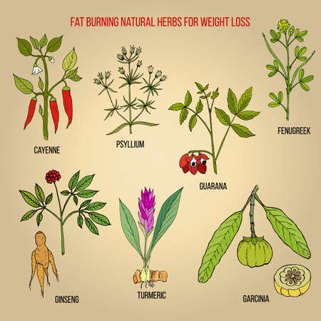 Best natural herbs for fat burning and fast weight loss. Hand drawn vector set of medicinal plants