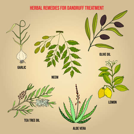 Best herbs for dandruff treatment. Hand drawn set of medicinal herbs