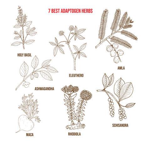Best adaptogen herbs. Hand drawn vector set of medicinal plants Vector Illustratie